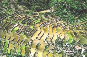 [Banaue rice terraces, Luzon; closer view]